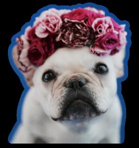 Flower Frenchie Sticker
