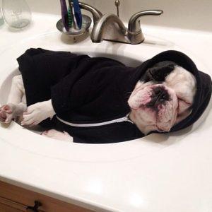 doug the pug twitter