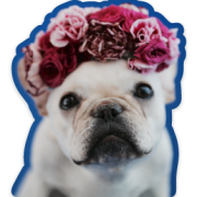Flower Frenchie Sticker