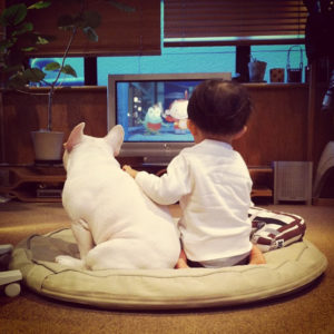french bulldog and boy